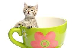 прелестный котенок Стоковое Изображение RF