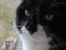 Прелестный кот думая о вечности Стоковые Фотографии RF
