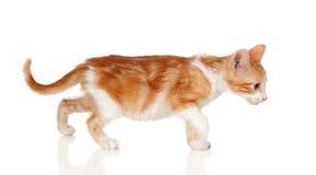 прелестный кот немногая Стоковые Изображения RF
