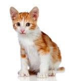 прелестный кот немногая Стоковые Фотографии RF