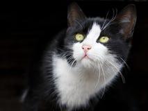 прелестный кот смотря мала стоковые фото