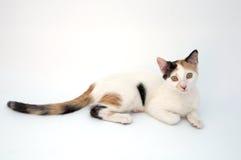 прелестный кот Стоковые Изображения RF