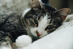 прелестный кот стоковая фотография rf