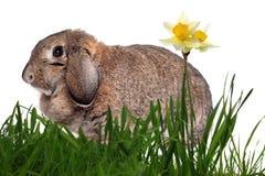 прелестный кролик зеленого цвета травы Стоковые Фотографии RF
