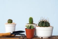 Прелестный крытый сад кактуса Стоковые Изображения
