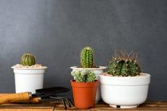 Прелестный крытый сад кактуса Стоковые Фото