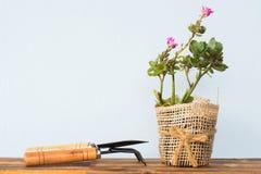 Прелестный крытый сад кактуса Стоковое Изображение RF