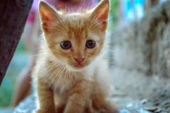 Прелестный портрет кота Стоковое фото RF