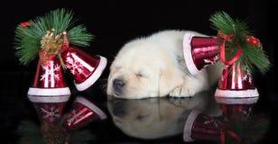 Прелестный щенок labrador спать на черной предпосылке Стоковое Изображение RF