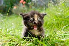 Прелестный meowing котенок tabby outdoors Стоковые Фото