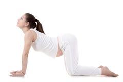 Пренатальная йога, представление коровы Стоковое Изображение