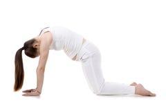 Пренатальная йога, представление кота Стоковые Фотографии RF