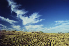 преобразовывать плодородную землю пустыни к Стоковое Изображение RF