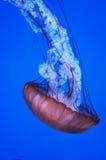 Преобразовывая морская водоросль Стоковые Фотографии RF