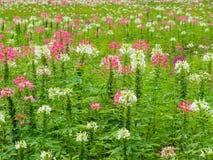 Преобразуйте цветки в свежей зеленой лужайке, ем смотрит освежать, красивый в лете стоковая фотография