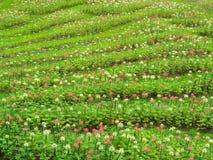 Преобразуйте цветки в свежей зеленой лужайке, ем смотрит освежать, красивый в лете стоковые фотографии rf