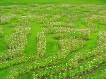 Преобразуйте цветки в свежей зеленой лужайке, ем смотрит освежать, красивый в лете стоковые фото