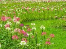 Преобразуйте цветки в свежей зеленой лужайке, ем смотрит освежать, красивый в лете стоковое фото