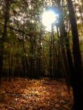 препятствуйте светлому shine Стоковое Фото