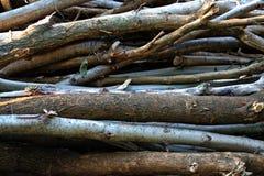 прерванная древесина кучи Стоковая Фотография