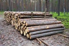 прерванная древесина пущи Стоковое Фото
