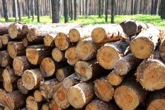 прерванная древесина пущи Стоковое Изображение