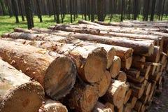 прерванная древесина пущи Стоковое Изображение RF
