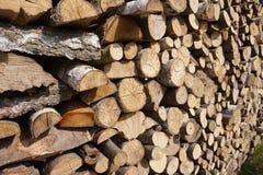 прерванная древесина пущи Стоковые Изображения RF