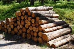 прерванная древесина пущи Стоковое фото RF