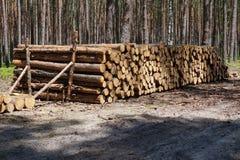 прерванная древесина пущи Стоковые Фотографии RF