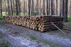 прерванная древесина пущи Стоковые Фото