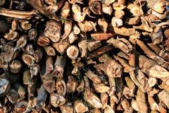 прерванная древесина Стоковое фото RF