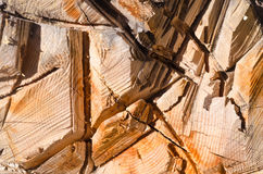 Прерванное trunck Стоковая Фотография RF