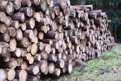Прерванные деревянные журналы для продажи используют в месте огня дома, который хранят на энергии биомассы древесин леса зеленой стоковое фото rf