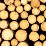 Прерванные деревья на стоге стоковые фотографии rf