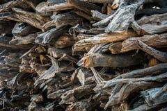 Прерванные журналы древесины Стоковое фото RF