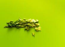 Прерванные луки весны на зеленой предпосылке Стоковые Изображения RF