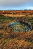 Прерванные утес и шлюпки в желтой траве около моря Стоковые Изображения RF