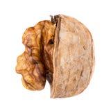 Прерванный конец-вверх грецких орехов на белизне Стоковое Изображение