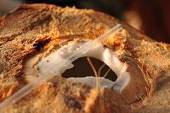 Прерванный открытый кокос и солома Стоковое фото RF