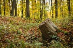 Прерванный ствол дерева в лесе Стоковое Фото