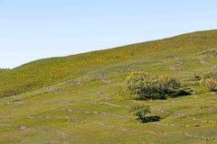 Прерия и дерево Стоковое Изображение