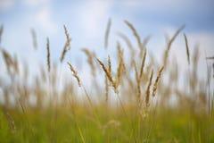 Прерия травы Стоковые Фото