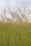 Прерия травы Стоковое фото RF