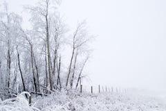 прерия тумана Стоковое фото RF