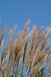 прерия 5 трав Стоковое фото RF