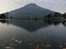 Пресноводная рыба в озере Embung Kledung Стоковые Фотографии RF