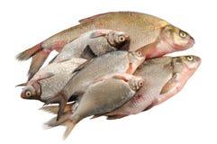 пресноводное рыб свежее несколько Стоковое Изображение RF