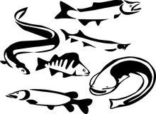 Пресноводные рыбы Стоковое Изображение RF