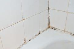 Прессформа в ванной комнате Стоковая Фотография